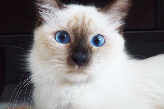 Fluffy the beautiful cat