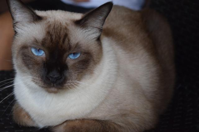 The snob cat, Mojo