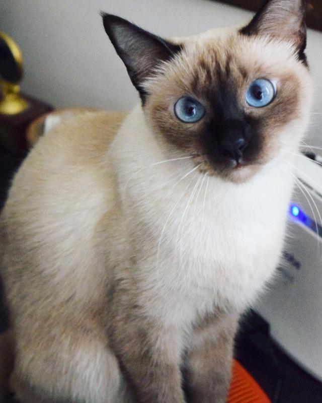 Maxi the cat